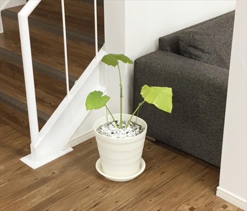 オフィスにある観葉植物