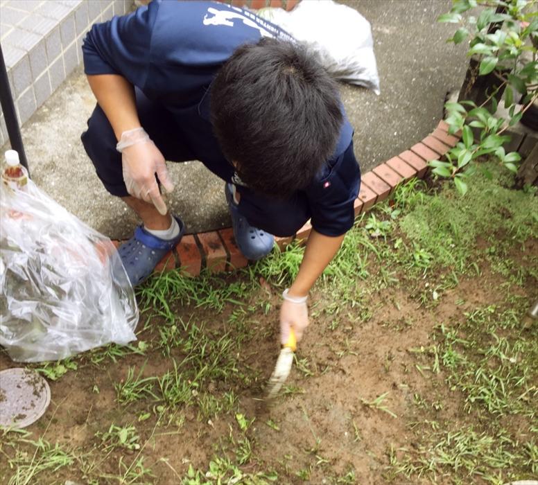 イシクラゲを除去するスタッフ