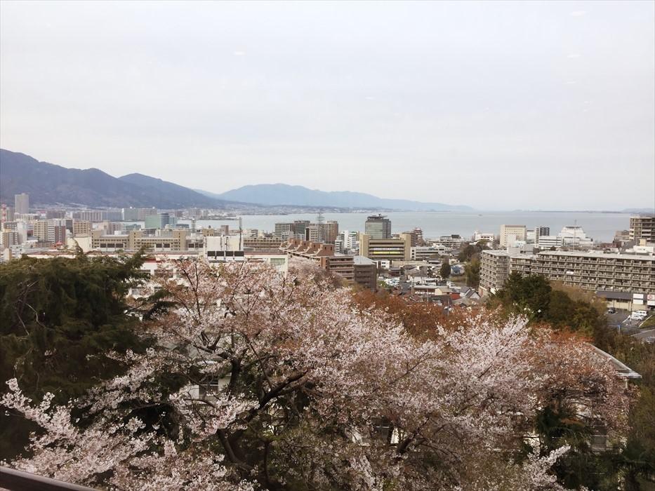 琵琶湖|桜