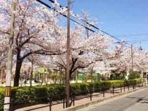 お客様ご新居近くの桜