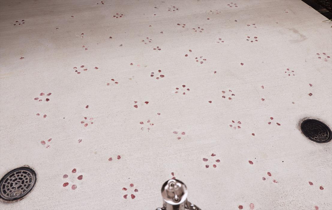 桜の石模様