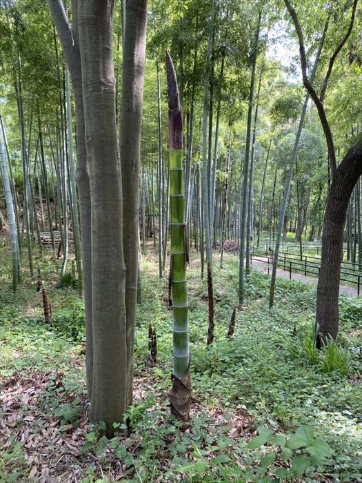 園内にある竹